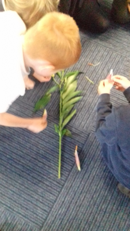 Learning about different parts of a flower